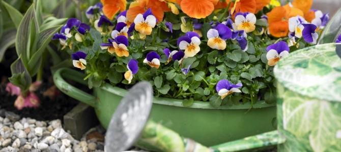 Begin het jaar fleurig met onze violen!